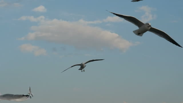 Flight Off The Seagulls