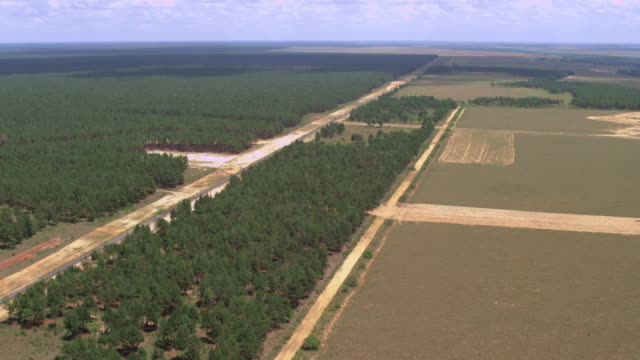 flight over a pine forest and fields - kieferngewächse stock-videos und b-roll-filmmaterial