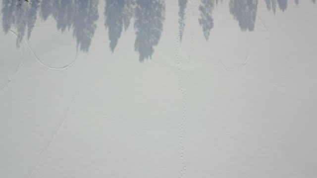 Vuelo sobre una sola línea de árboles de pino en Noruega.