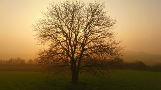 Flight over farmland and tree on Saargau at sunrise, Kirf, Rhineland-Palatinate, Germany