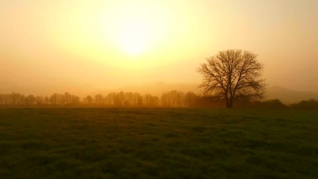 flight over farmland and tree on saargau at sunrise, kirf, rhineland-palatinate, germany - grass family stock videos & royalty-free footage