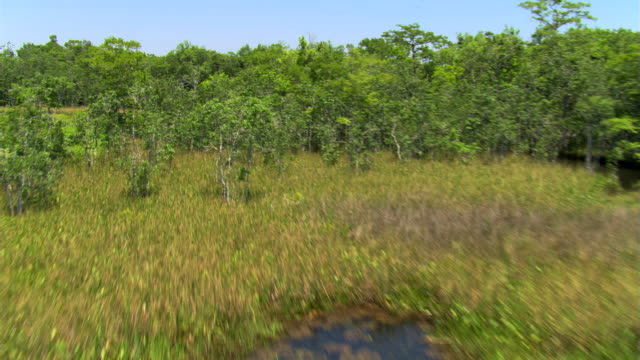 flight over florida swampland and forest - artbeats stock videos & royalty-free footage
