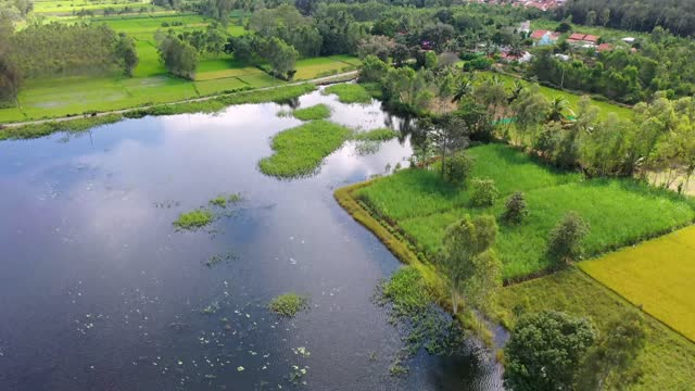 flight over lush paddy fields and a village pond - lush stock videos & royalty-free footage