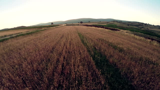 flight over ripe wheat field - low stock videos and b-roll footage