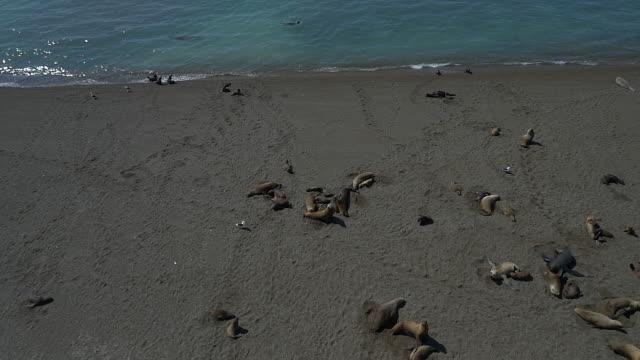 Flight over sea lion colony onto the ocean