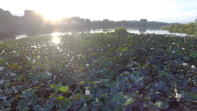 Flyg över gården lotus