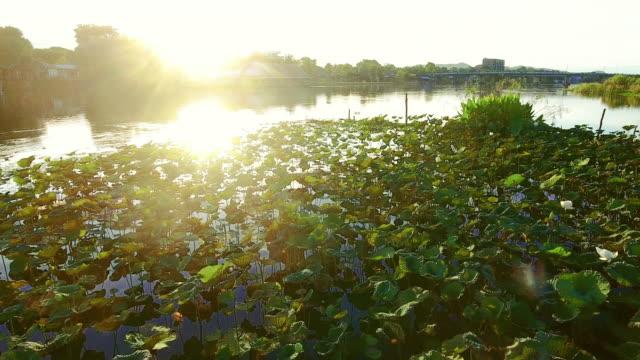 Flyg över gården lotus.
