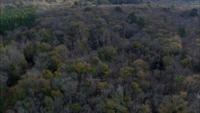 Flight Over Trees In Swamp  - Aerial View - Georgia,  Wayne County,  United States