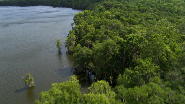 flight over trees lining a florida river to wide view of ocean water - artbeats 個影片檔及 b 捲影像