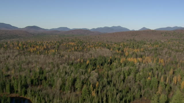 flight over trees - appalachian mountains stock videos & royalty-free footage