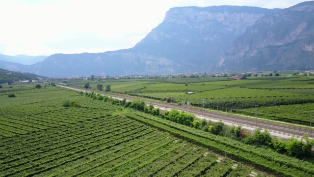 Flight over vineyard near Trento, Province of Trento, Dolomites, South Tyrol, Italy, Europe