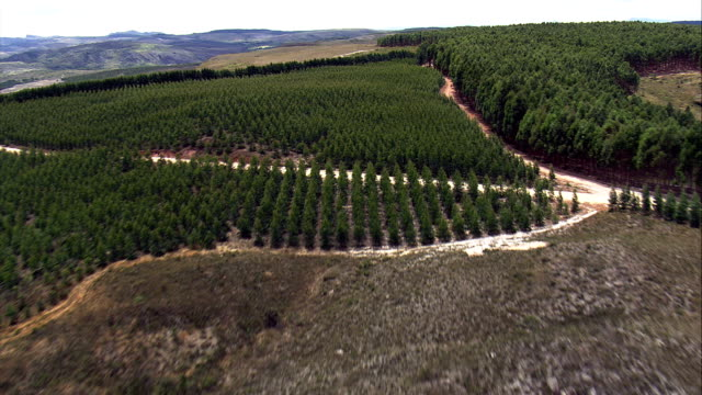 Flight Past Edge Of Eucalyptus Plantation  - Aerial View - Minas Gerais, Presidente Kubitschek, Brazil