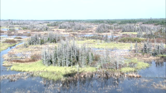 flight rising up over swamp  - aerial view - georgia,  ware county,  united states - okefenokee national wildlife refuge stock videos and b-roll footage