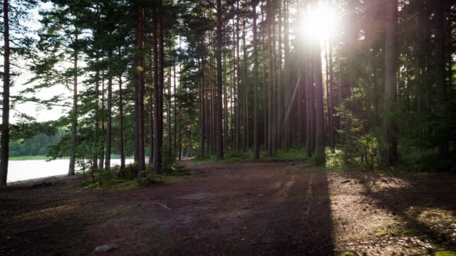 Flight through back lit forest - 4K Nature/Wildlife/Weather
