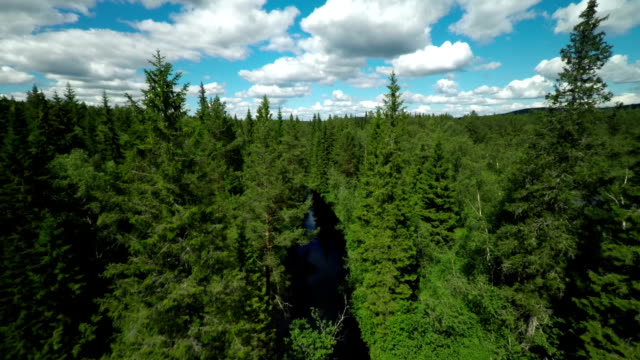 Flight through Forest Canopy - Boreal Forest Sweden