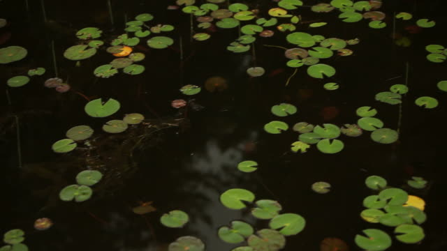 Floating by Lily Pads in Canadian Wilderness