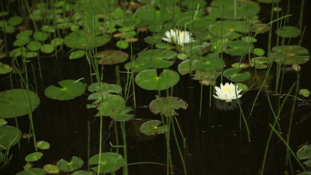 Floating by Lily Pads on Lake in Canada