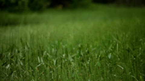 floating by tall grass - north stock videos & royalty-free footage