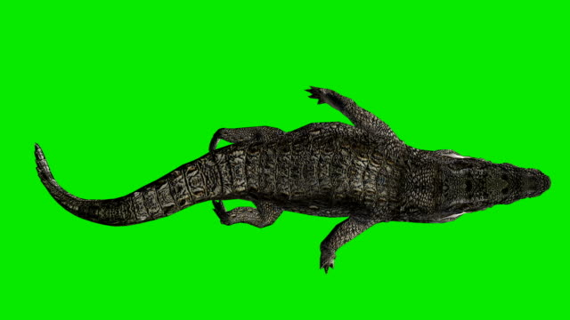 floating crocodile green screen (loopable) - alligator stock videos & royalty-free footage