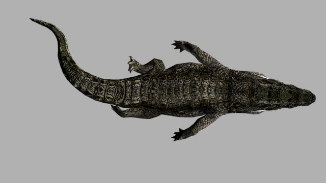 Floating Crocodile with Alpha Channel (Loopable)