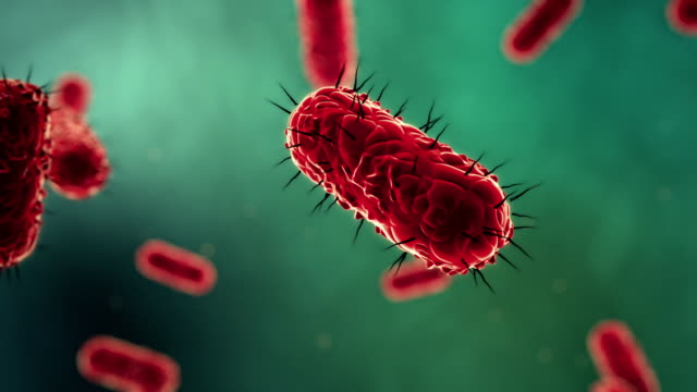 floating e. coli bacteria - microbiology stock videos & royalty-free footage