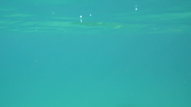 floating on the surface of water - ocean surface level stock videos & royalty-free footage
