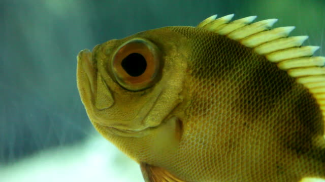 floating perch closeup - hd 30p - medium group of animals stock videos & royalty-free footage