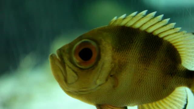 vídeos de stock e filmes b-roll de flutuante poleiro-hd 30p - quatro animais