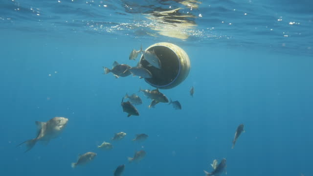 stockvideo's en b-roll-footage met floating plastic bin gives home to fish, underwater - zeedieren