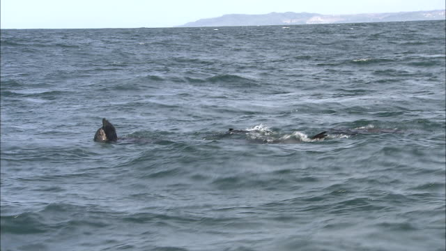 floating seals stick their flippers above the ocean's surface. - 水に浮かぶ点の映像素材/bロール