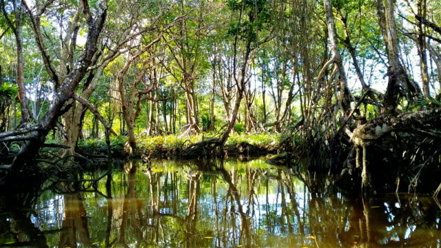 floating through the mangroves - mangrove forest stock videos & royalty-free footage