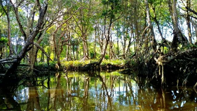 Schwimmende durch die Mangroven