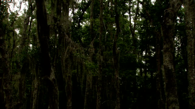 floating through wetlands, past trees covered in spanish moss. available in hd. - epiphyte stock videos & royalty-free footage
