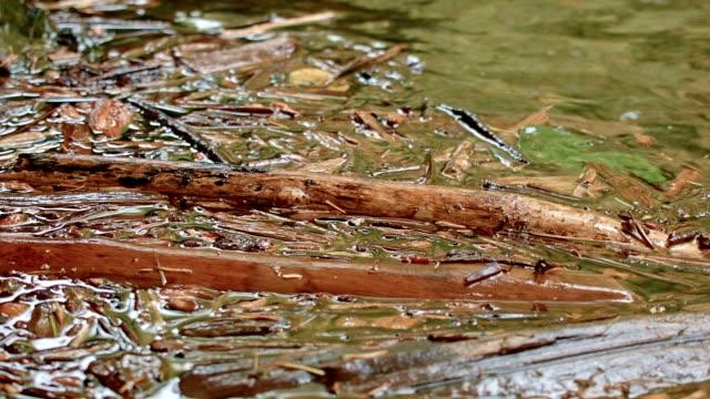 floatsam in stream eddy columbia river gorge oregon rain in oneata gorge 89 - columbia river gorge stock videos & royalty-free footage