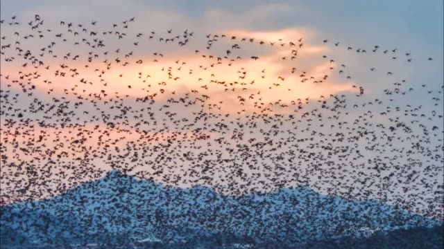 a flock of baikal teals flying over the water - branch stock videos & royalty-free footage