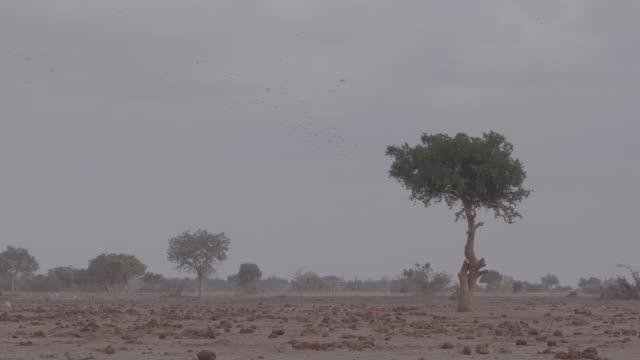 flock of birds / africa - 有名原生地域点の映像素材/bロール