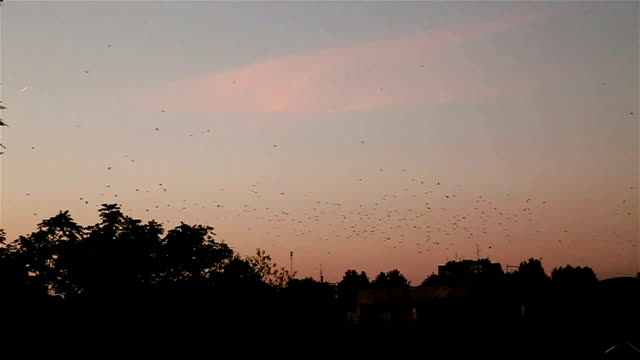 flock of birds at dusk