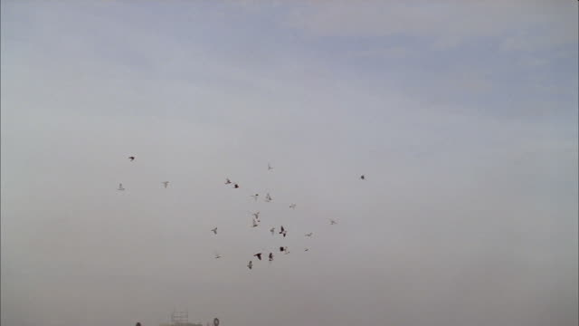 a flock of birds creates interesting formations as they soar through the sky. - formation flying stock videos & royalty-free footage