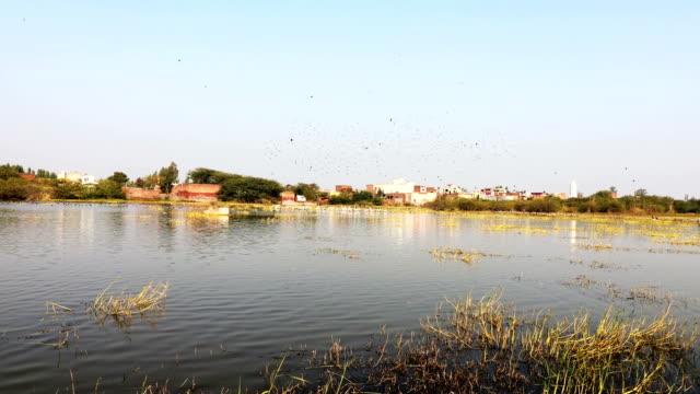 vídeos y material grabado en eventos de stock de bandada de pájaros en el lago cerca del pueblo - boca de animal