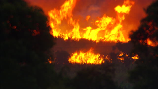 a flock of birds flies past a raging brush fire. - waldbrand stock-videos und b-roll-filmmaterial