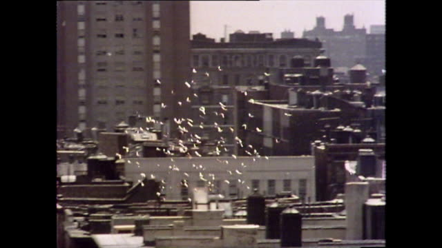 vídeos de stock e filmes b-roll de flock of birds fly over new york buildings; 1976 - 1976