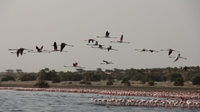 vídeos de stock, filmes e b-roll de flock of birds fly over remote lake - tempo real
