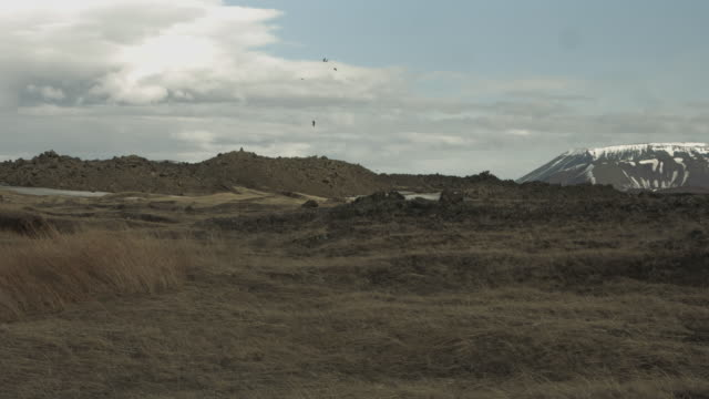 stockvideo's en b-roll-footage met a flock of birds fly over the landscape of northern iceland. - wildernis