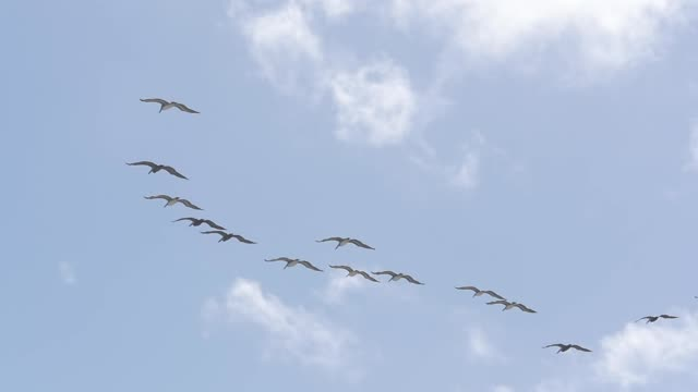 flock of birds flying and patch clouds - efficiency stock videos and b-roll footage