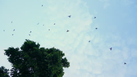自然の中を飛ぶ鳥の4k群れ - スズメ点の映像素材/bロール