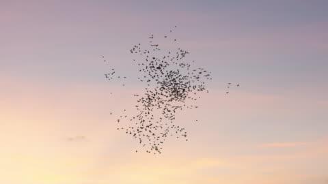 vogelherde fliegt am himmel - bird stock-videos und b-roll-filmmaterial