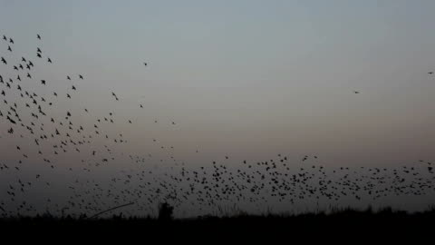 v 形成で飛ぶ鳥の群れ - スズメ点の映像素材/bロール