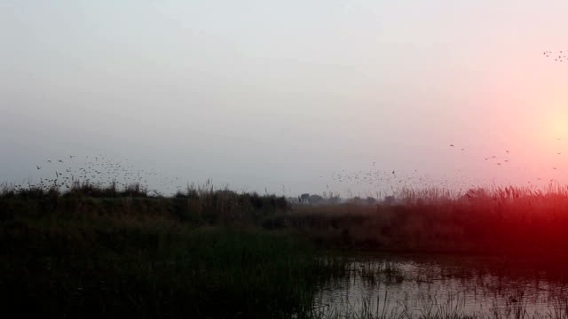 flock of  birds flying in v formation - morning stock videos & royalty-free footage