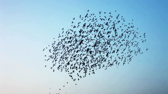 flock of  birds flying in v formation - mid air stock videos & royalty-free footage