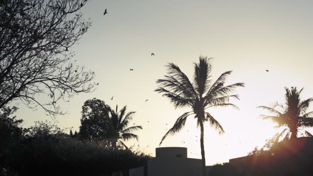 A flock of birds flying over palm tree at Al Sawadi Beach, Oman
